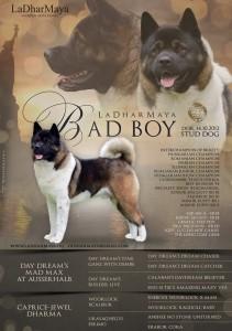 Bad Boy leták