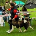 NV  Wisla PL,V1,CAC,Best Dog,BOB